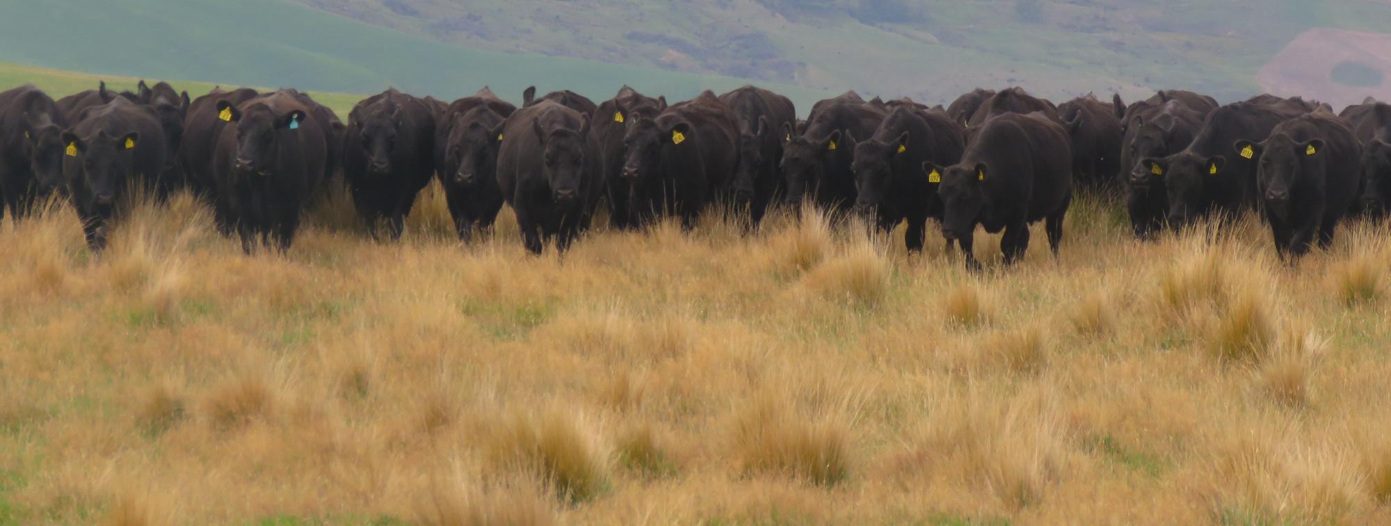 Harvie Green Wyatt help with farm succession planning