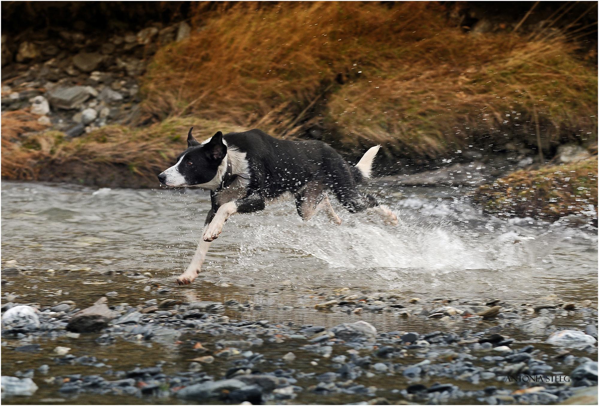 Heading Dog full of energy on Mighty Mix Dog Food