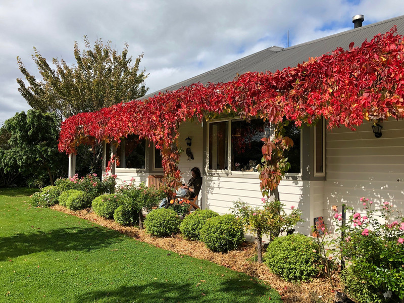 Located in Outram, NZ, the cottage in its full Autumn livery.