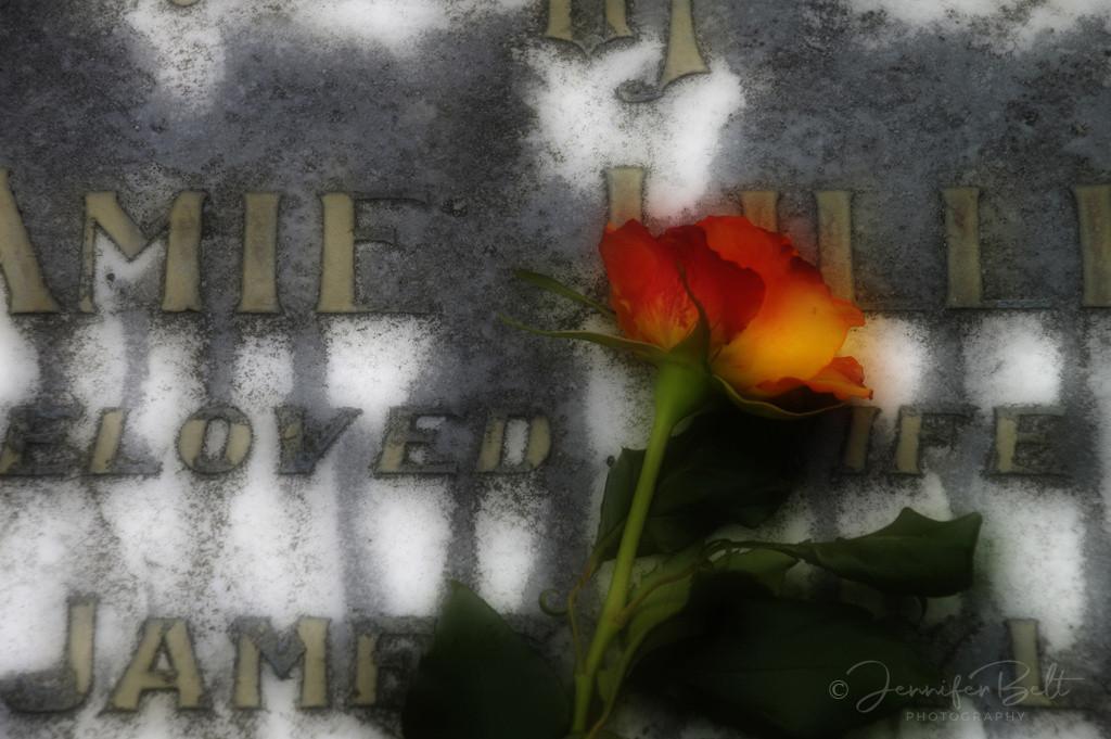 Jamie's Rose