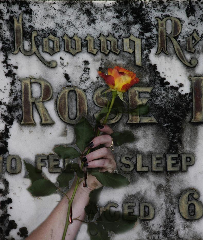'Rose' II