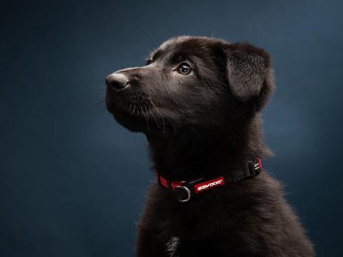 Weta as a puppy
