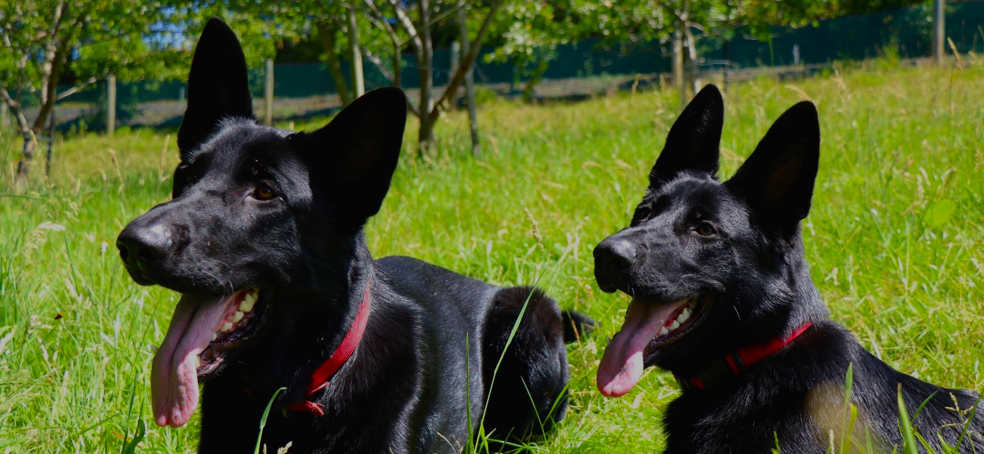 K9MD improving the health of New Zealanders
