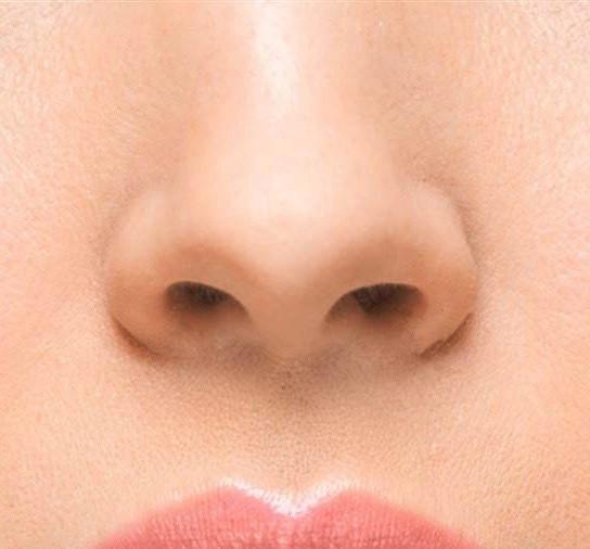 5 million olfactory receptors