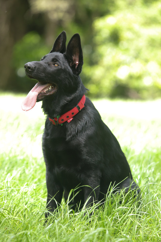 Support K9MD with a bequest
