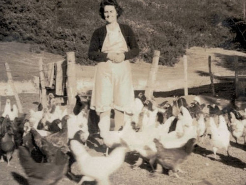 A historical picture of the Craig family out feeding the hens
