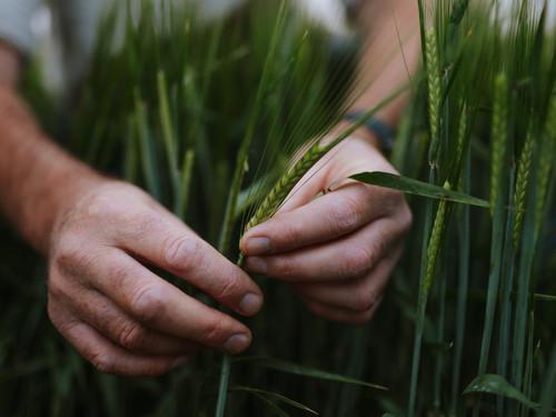 We use the hens manure as a naturally rich fertiliser