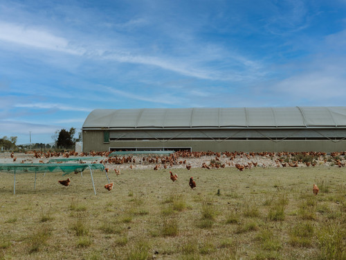 The Bowalley Free Range farm has lots of grass and shelter for any kind of weather