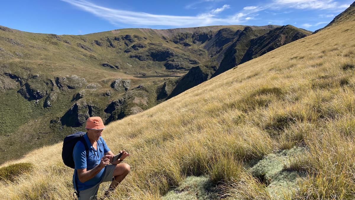 Apine grasslands Kahurangi National Park