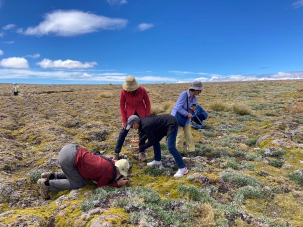 Cushion Flora, Old man Range summit plateau