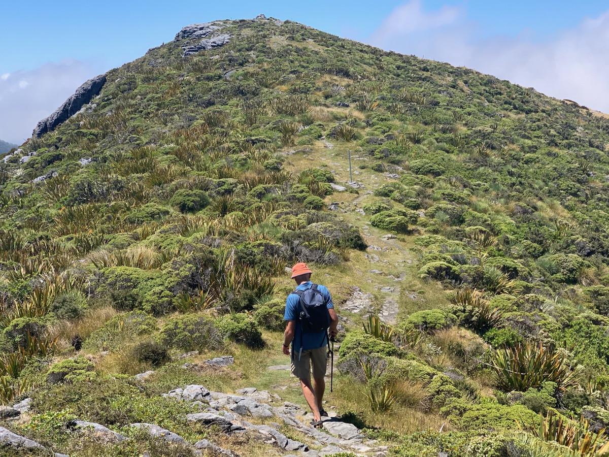 Mt Arthur, Kahurangi National Park